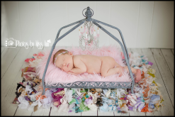 Girl Newborn Photographer Plymouth Michigan Photos by Miss Ann